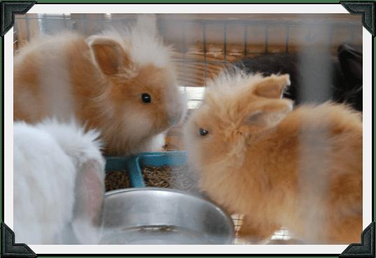 4D bunnies