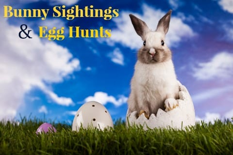 Egg Hunts & Bunny Sightings in Huntsville