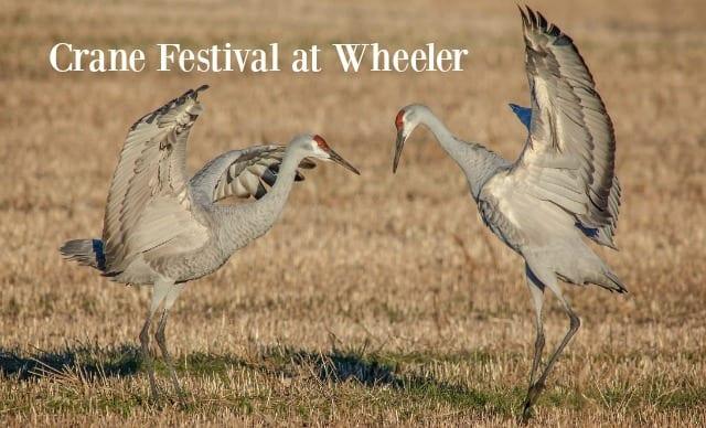 Festival of the Cranes at Wheeler National Wildlife Refuge