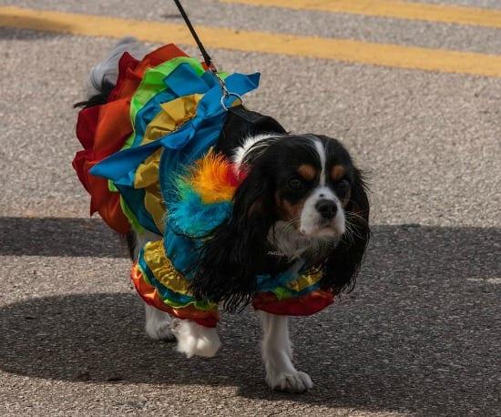 Dog Parade Carnegie carnival dog