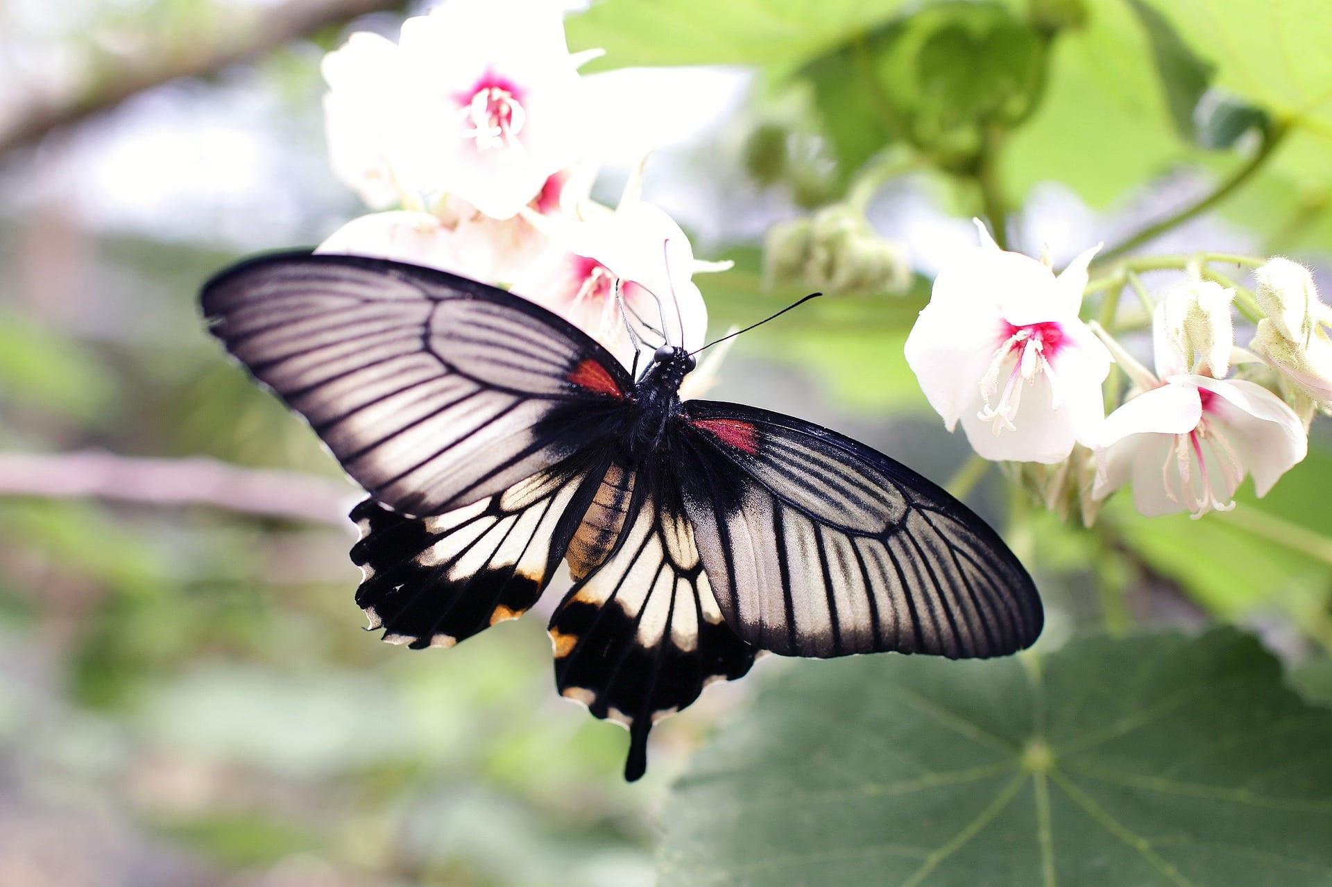 5 Reasons to Be a Member: Huntsville Botanical Garden