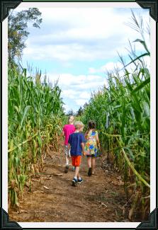 Corn Maze 4D