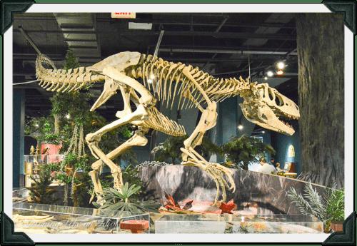 McWane Dino skeleton