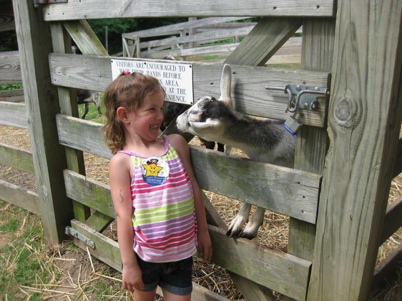 Burritt goats
