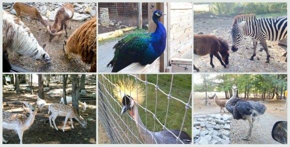 Harmony Park Animals 1