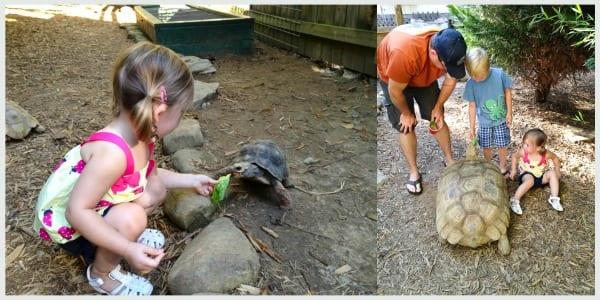 Harmony Park Turtle
