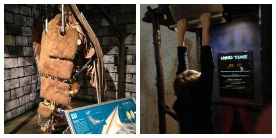 How long can you hang like a bat?