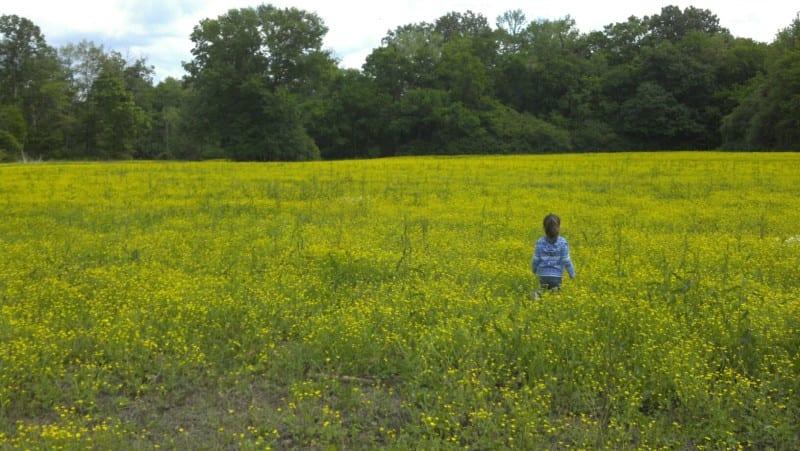 Hays Nature Preserve