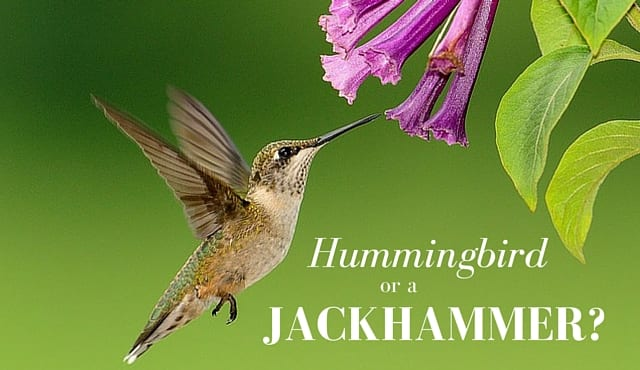 Where My Hummingbirds At?