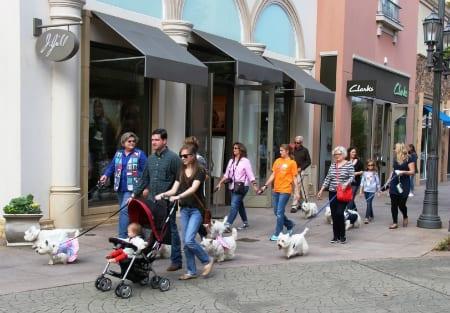 Fall Westies' Walk at Bridge Street | Rocket City Mom