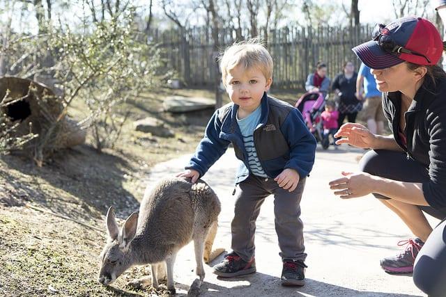 Nashville Zoo Carload Special
