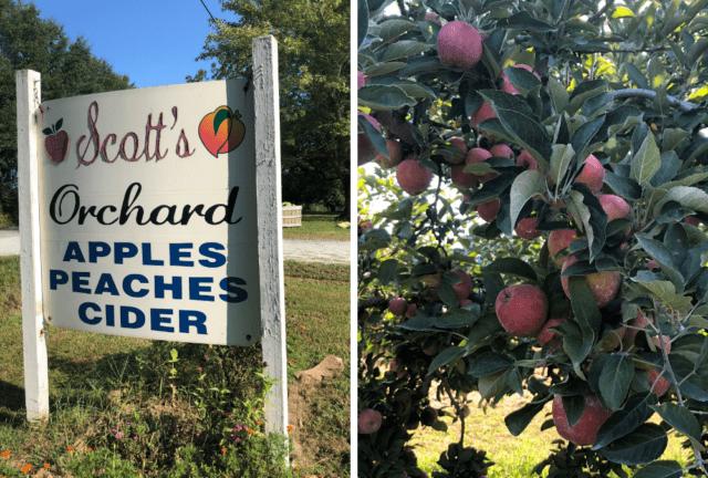 apple picking in huntsville